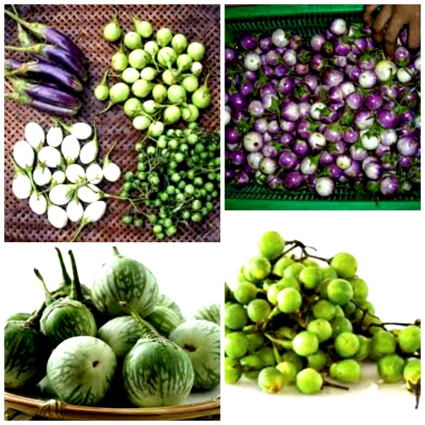 eggplants5